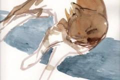 589236d00ee0e-fekvo-macska-akvarell